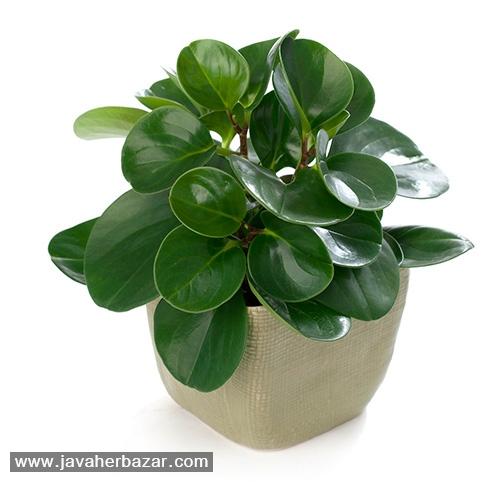 معرفی 10 گیاه که انرژی مثبت ایجاد می کنند!