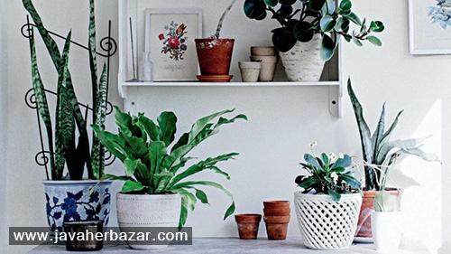 با استفاده از گیاهان در منزلتان محیط را سرشار از انرژی مثبت کنید.