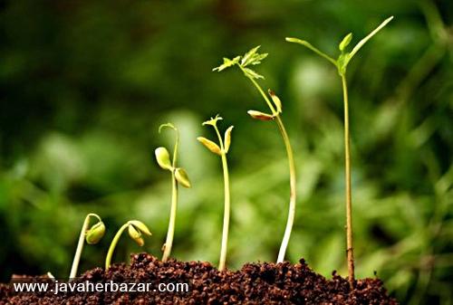 بجای سبزه عید بذر نهال بکاریم