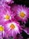 تصویر کاربری