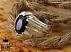 انگشتر نقره یاقوت آفریقایی فاخر مردانه - 34450 - 1