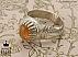 انگشتر نقره اپال شاهانه مردانه دست ساز - 34627 - 1