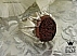 انگشتر نقره عقیق یمن حکاکی امیری حسین و نعم الامیر مردانه - 36414 - 1