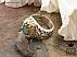 انگشتر نقره زمرد زامبیا اشرافی مردانه - 36616 - 1