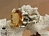 انگشتر سیترین شاهانه مردانه دست ساز-1