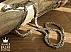 زنجیر 55 سانتی ماری شکیل-1