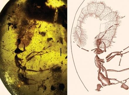 کشف مورچه ای 98 میلیون ساله در یک کهربا